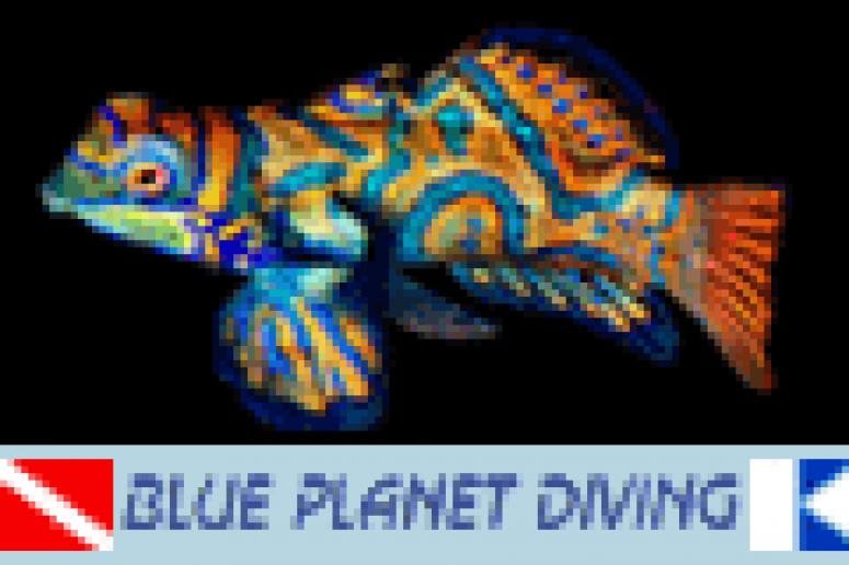 Mandarin fish - Blue Planet