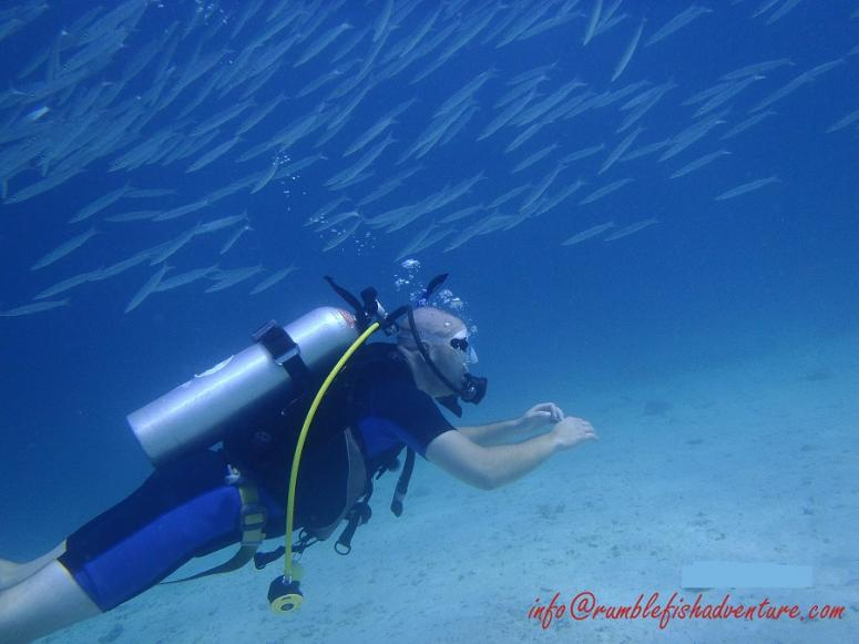 OW course dive, Lucy Reef, Raya Yai Island