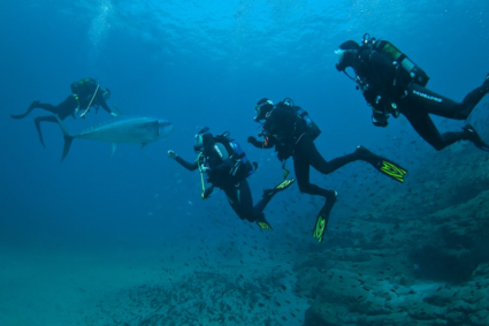 Dive with Tuna fish