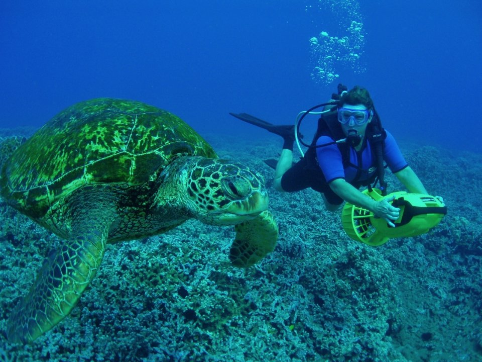Scooter diver and Turtle