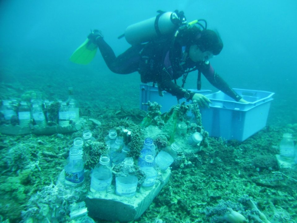 coral planting on bottle reefs
