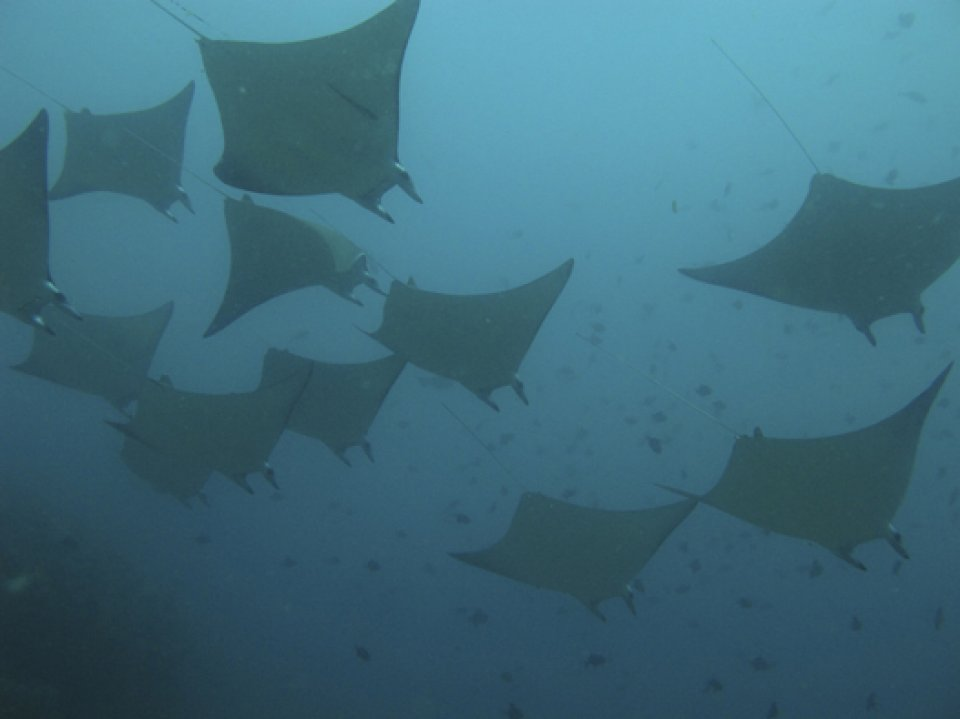 Scuba Diving Belongas Bay