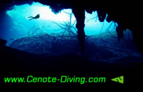 one Day Cenote Diving Level A (Start Level)