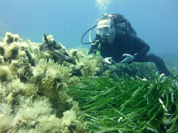 Diving in gozo for Gozo dive centres