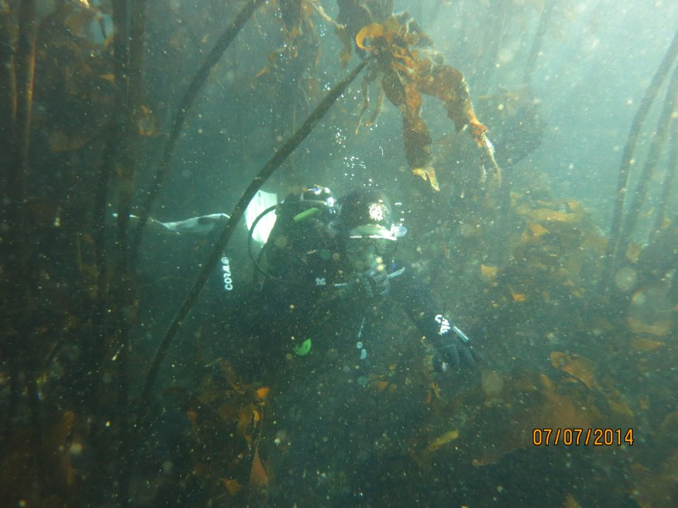Kelp Forest Dive