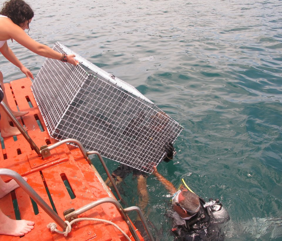 Shark Tagging Cages