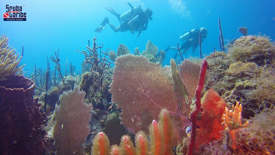 Corals of Catalina