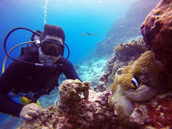 Daily 2 dives package 1 week package (include full equipment)