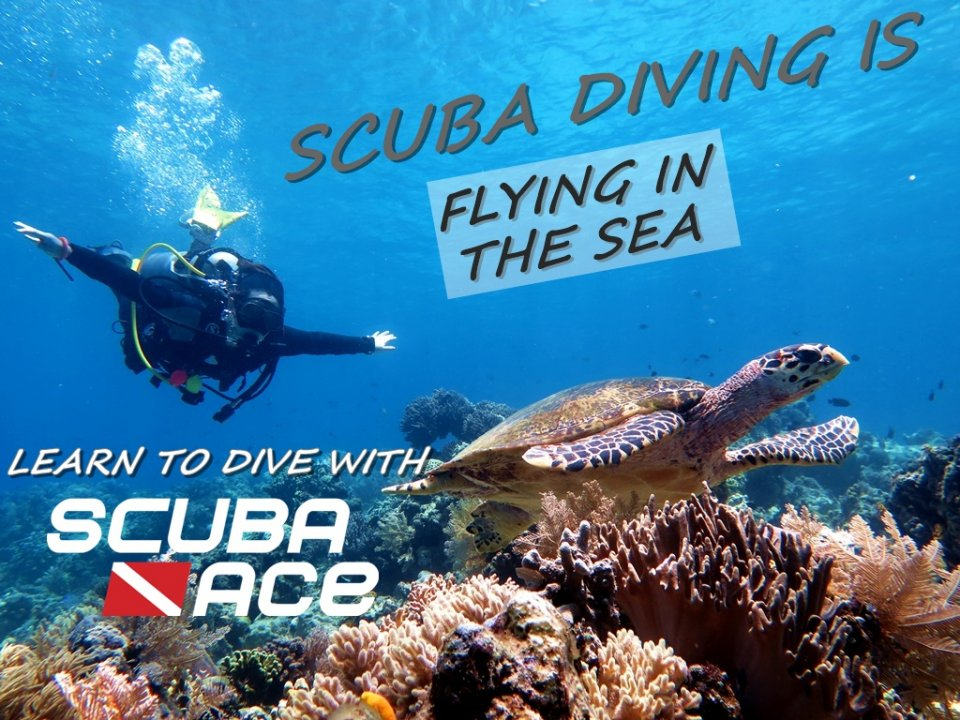 Scuba diving is flying in the sea, learn to dive with us. Photo taken at Sipadan Island, Malaysia.