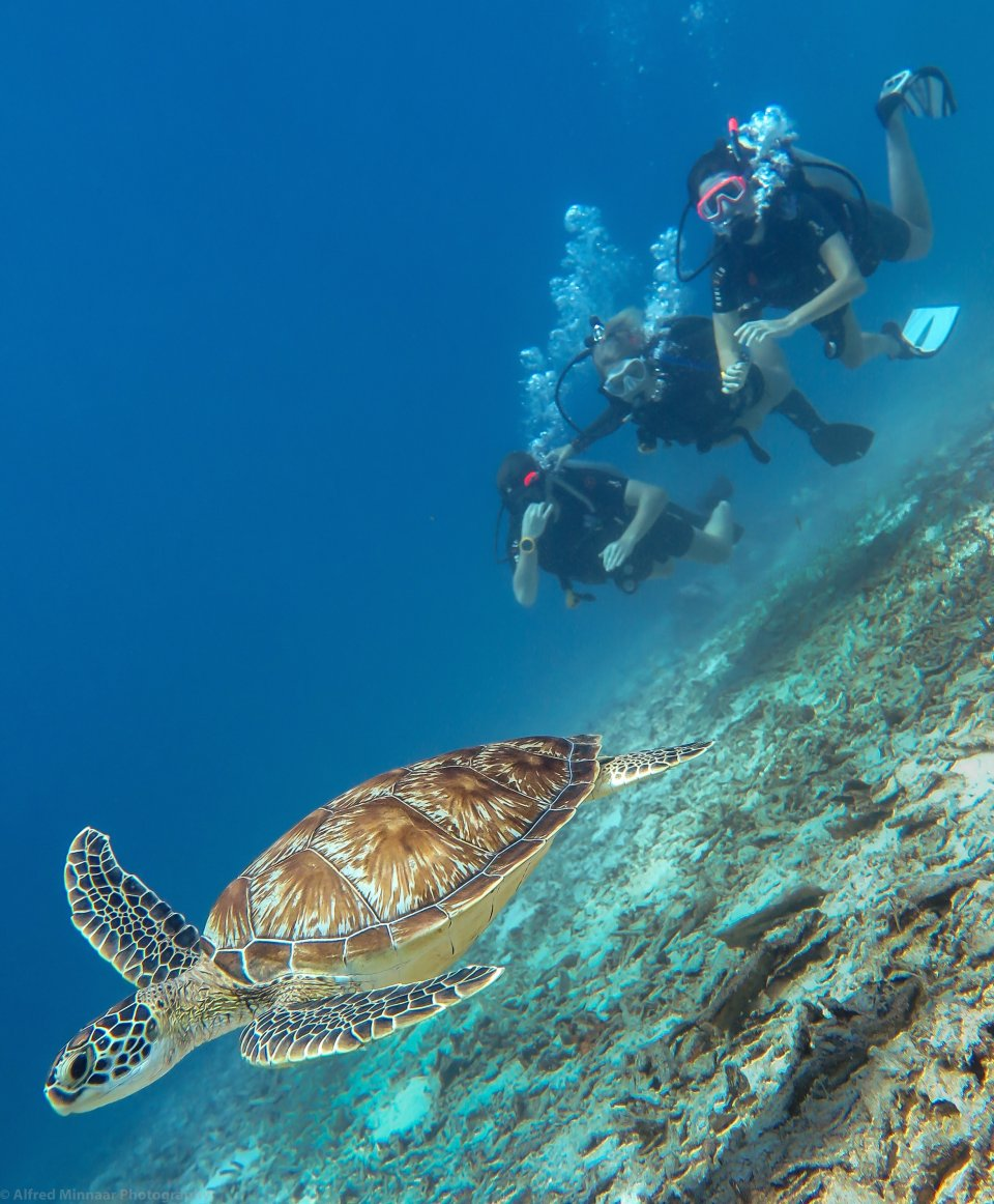 Dive the 'Turtle Capital of the World'
