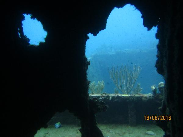 Diving Caribe