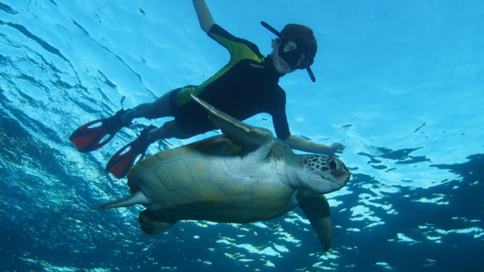 Snorkeling and Scuba Diving with Turtles