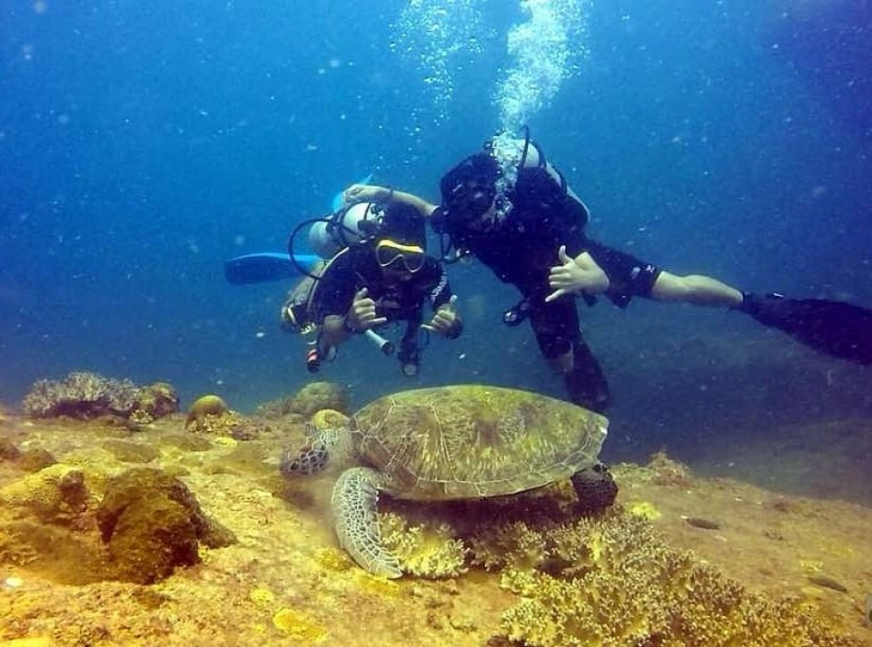 Dive with TURTLE.