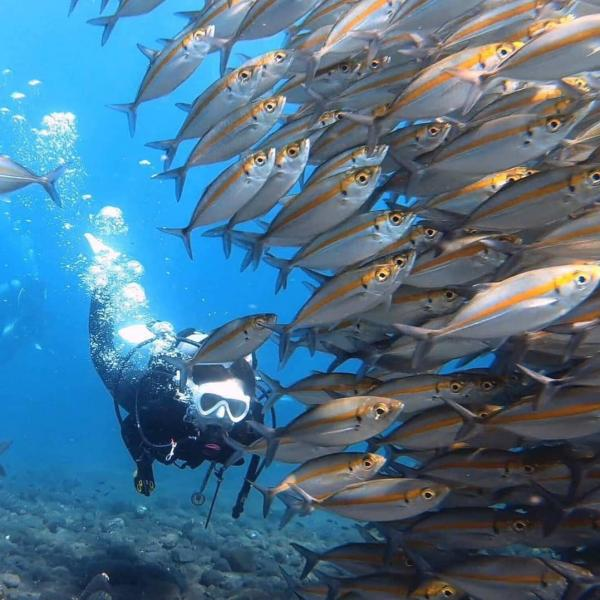 Adventure dive trip to USAT Liberty Wreck Tulamben Bali