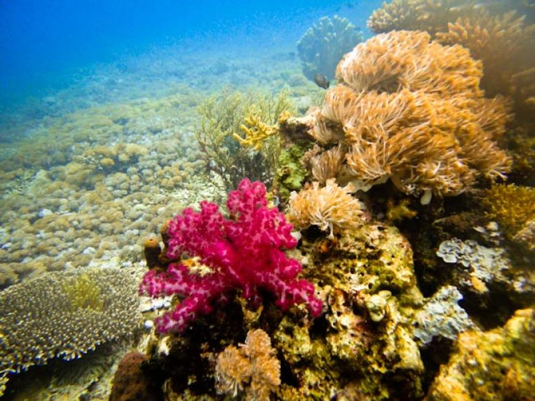 Beautiful colorful corals