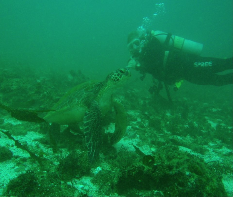 Diving in Salalah