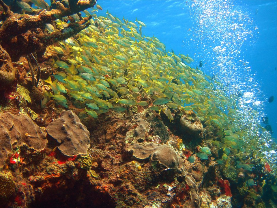 Beautiful Reef near Cancun