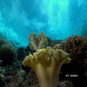 Reef Crest at West Point Gorontalo