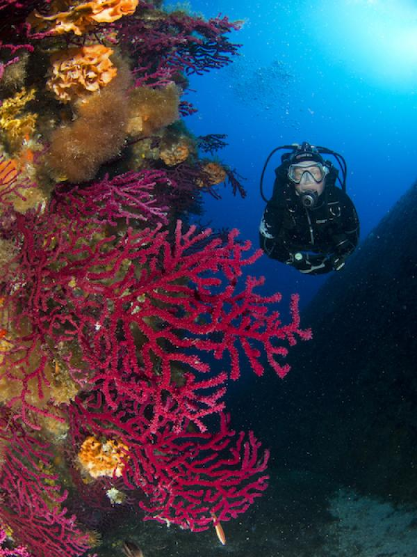 7 nights with 10 dives package