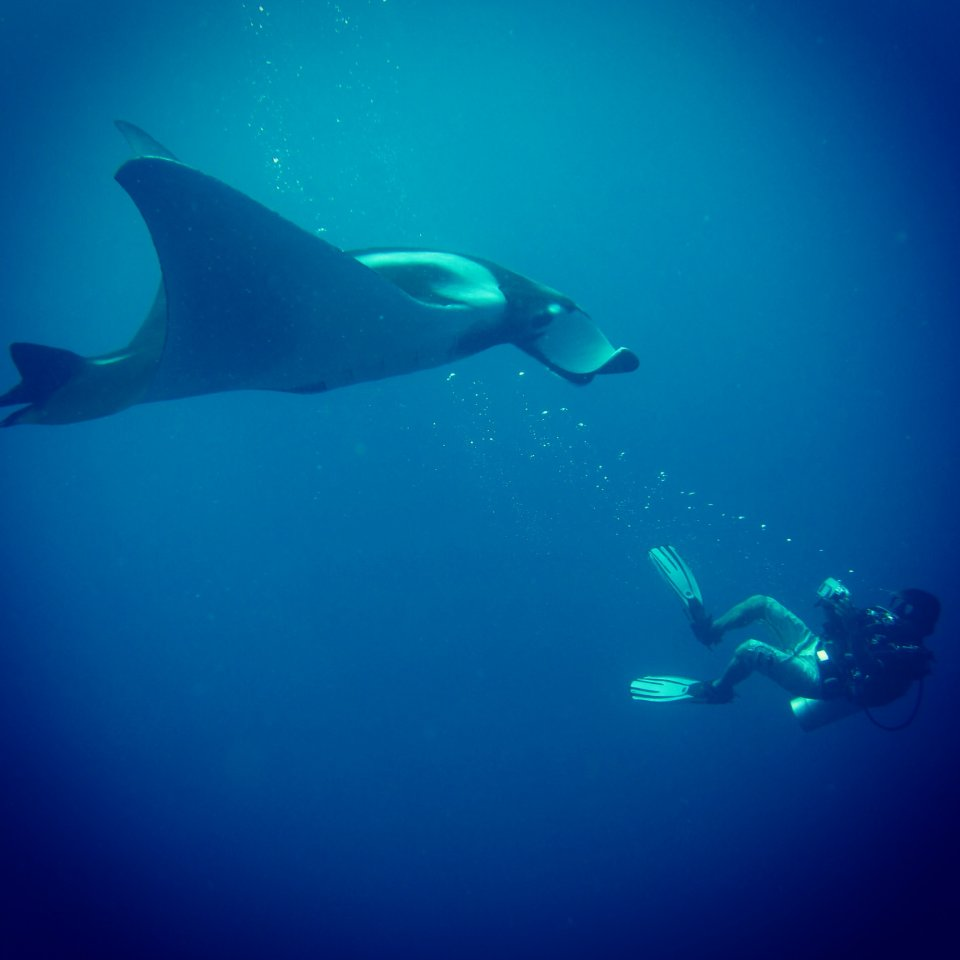 Big Manta Ray with Similan Liveaboard Trip By Bangtao Dive Center