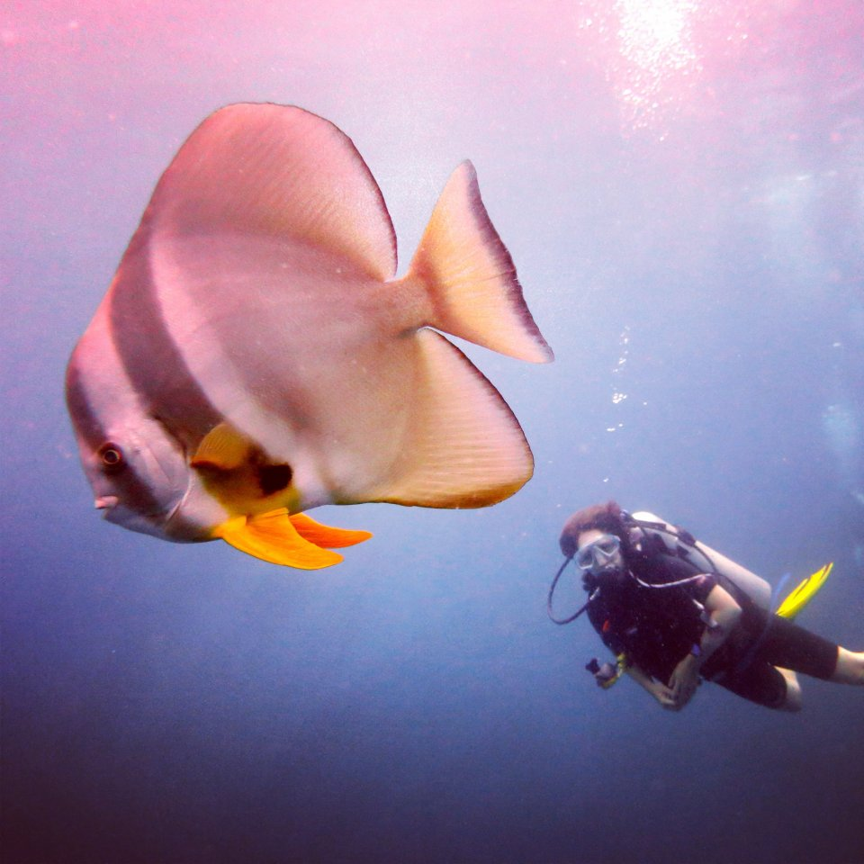 Batfish with our Bangtao Dive Customer #www.bangtaodive.com