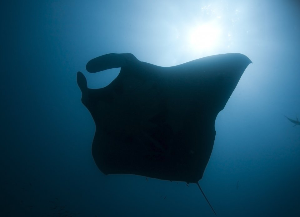 mantaray.MANTA POINT